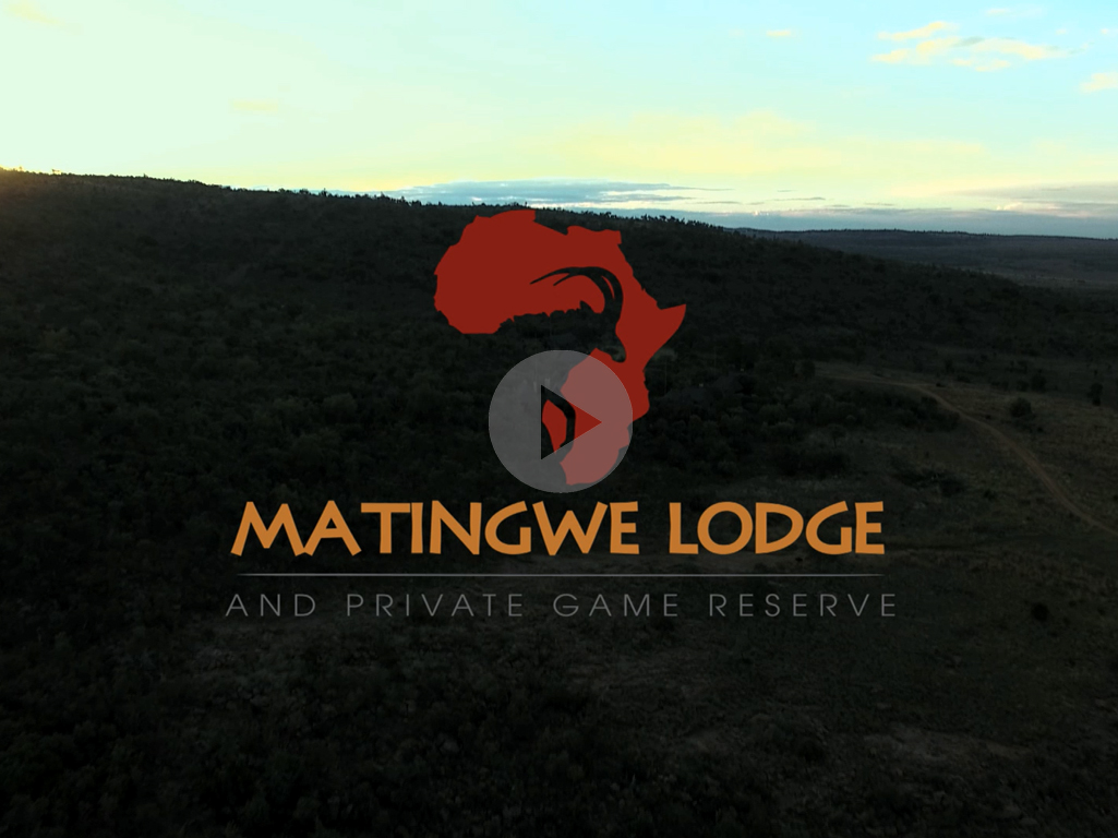 Click to play the Matingwe Lodge Promo